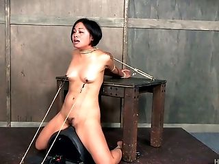 Bounded Asian Gal Milcah Halili Rails A Sybian Saddle And Gets Her Muff Toyed